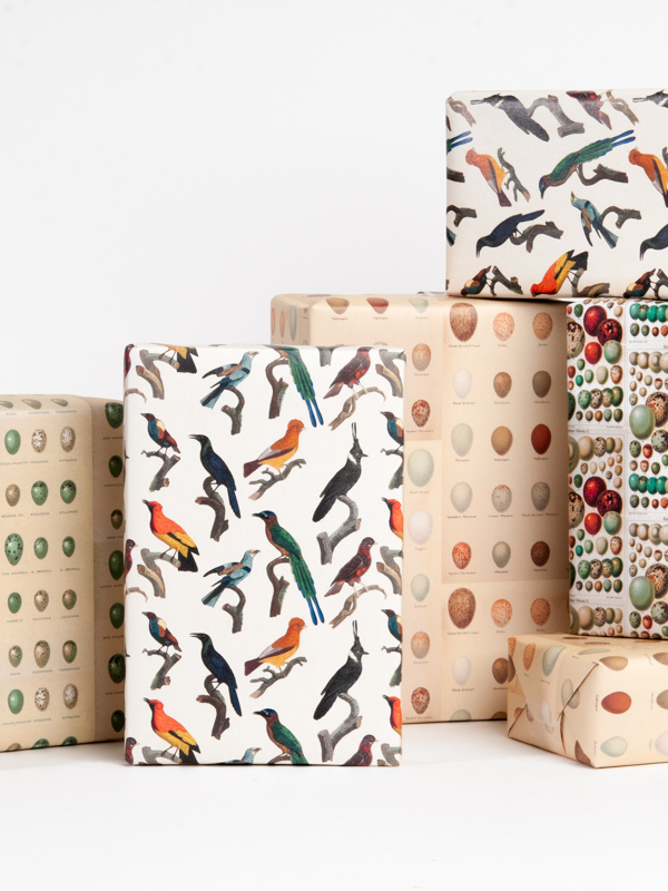 Bird and Egg Gift Wrap
