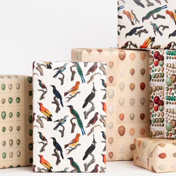 Bird and Egg Gift Wrap